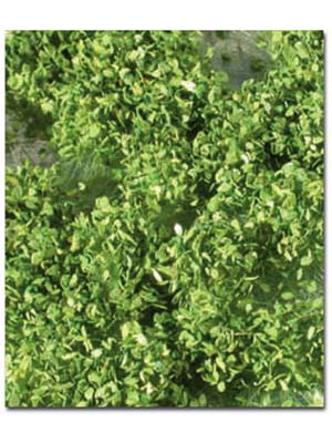 scenic express mn72521s sping leafy weed tufts
