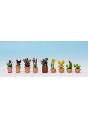 noch 14080 ornamental plants #4