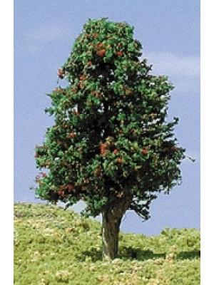 """timberline 232 apple trees 3-5"""""""